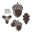 Oak Acorn Leaf vector image vector image