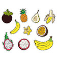 set of exotic fruits stickers collection of vector image