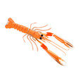 fresh langoustine icon for menu design isolated on vector image vector image