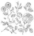 hand drawn wild roses set vector image