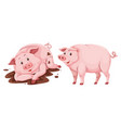 pig on white background vector image vector image