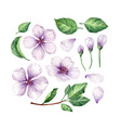 set collection apple flowers petals and vector image vector image