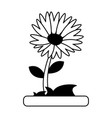 daisy flower icon image vector image