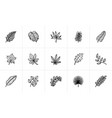 leaves of plants and trees sketch icon set vector image