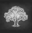 chalk sketch oak without leaves vector image vector image