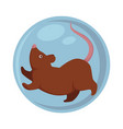 domestic rat with long tail and pink nose in ball vector image