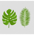monstera palm branch isolated white background vector image vector image