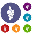 grapes icons set vector image vector image