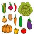 Organically grown vegetables colorful sketches vector image vector image