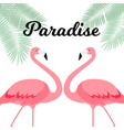 summer creative poster with pink flamingo card of vector image vector image