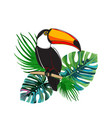 toucan sitting on branch exotic bird with vector image vector image