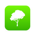 tree with a rounded crown icon digital green vector image