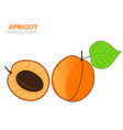 apricot fruit vector image vector image