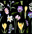 crocuses with herbs and many kind flowers vector image
