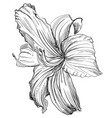 hand drawing flower 1 vector image vector image