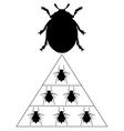 Ladybird diet pyramid vector image vector image