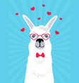 llama in love in a bow tie and heart-shaped vector image vector image