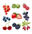 set icons juicy ripe berries vector image