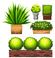 set of plant on white background vector image vector image