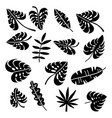set palm leaves silhouettes isolated on white vector image