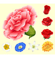 Various kind of flowers vector image vector image