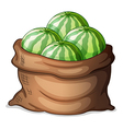 A sack of fresh watermelons vector image vector image