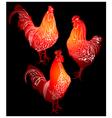 cock bird farm vector image vector image