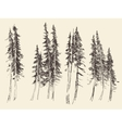 Fir forest engraving hand drawn sketch vector image vector image