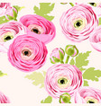 seamless pattern with ranunculus vector image vector image