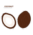 coconut fruit vector image vector image