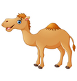 Cute camel cartoon vector image