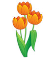 image with tulip flower theme 1 vector image