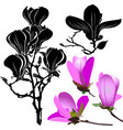 set flowers magnolia isolated on white background vector image vector image