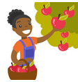 a black woman collects apples from an apple tree vector image