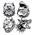 dog head pitbull logo mascot annimal drawing vector image vector image