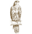 engraving of saker falcon vector image vector image