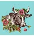 head of cow cow vector image