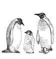 penguin sketch hand drawn vector image vector image