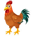 a rooster on white background vector image