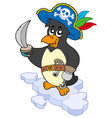 pirate penguin vector image