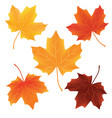 set of fallen autumn leaves isolated on white vector image