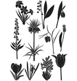 spring flower set vector image