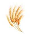 Wheat ears EPS 10 vector image vector image