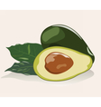 Avocado fruit isolated vector image vector image