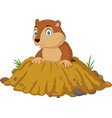 cartoon funny groundhog standing outside its burro vector image vector image