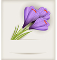 crocuses bouquet vector image