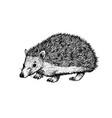 hand drawn hedgehog black white sketch