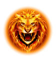 Head of fire lion vector image