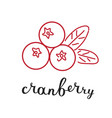 cranberry and hand writing lettering name vector image vector image