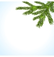 Green branches of a Christmas tree on a white vector image